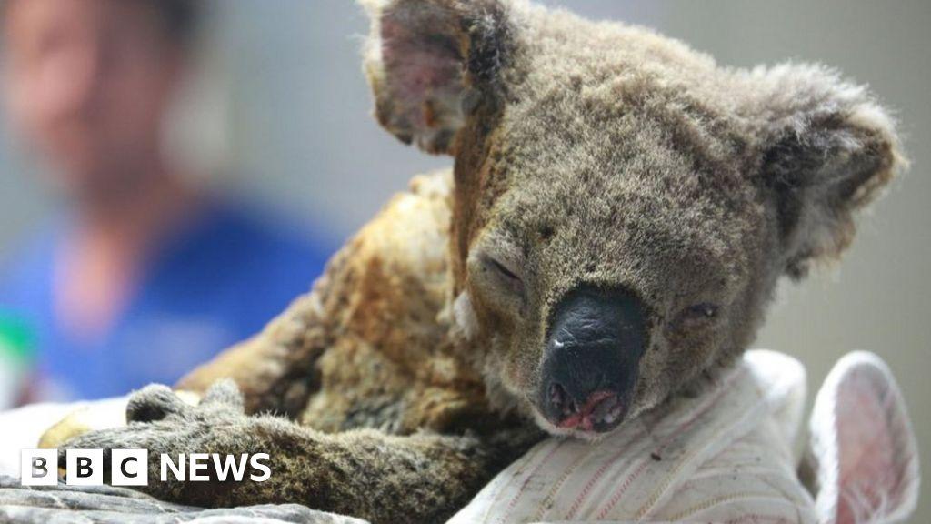Australia bushfires: Which animals typically fare best and worst?