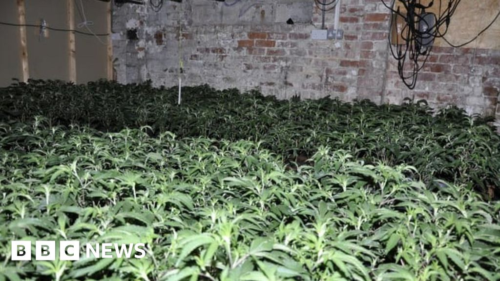 post-image-Giant £10m cannabis farm discovered by police