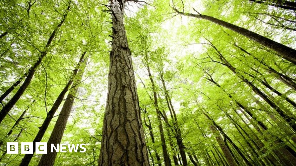 What's wrong with planting new forests?