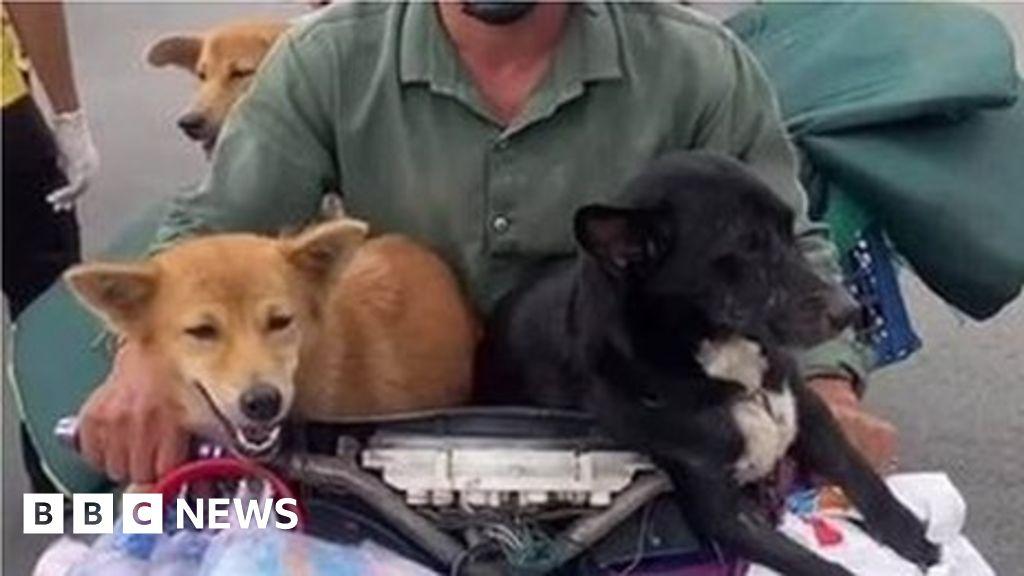 Vietnamese couple heartbroken as 15 dogs killed over Covid