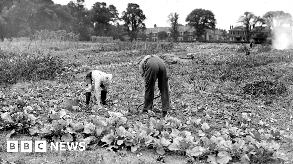Dig for victory: stories from the war time gardens