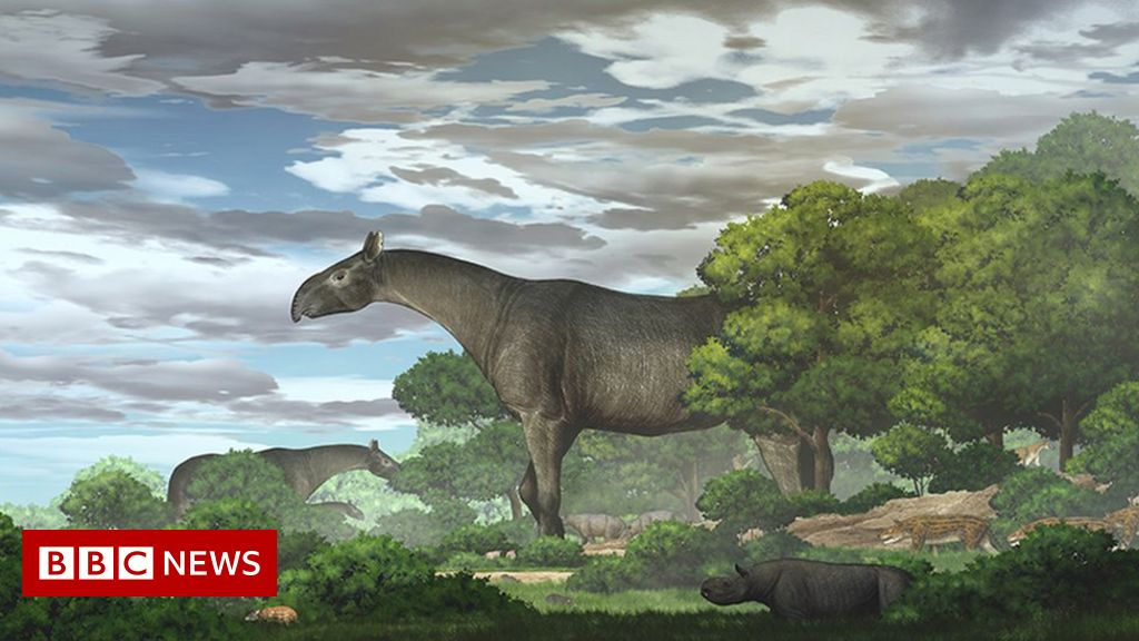 Giant rhino fossils in China show new species was 'taller than giraffe'