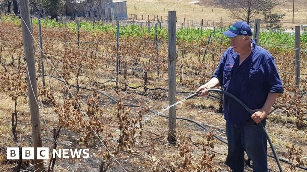 Australia fires: the vineyard-owner s grief and determination