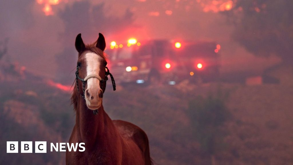 In pictures: The animals caught in California's wildfires - BBC News