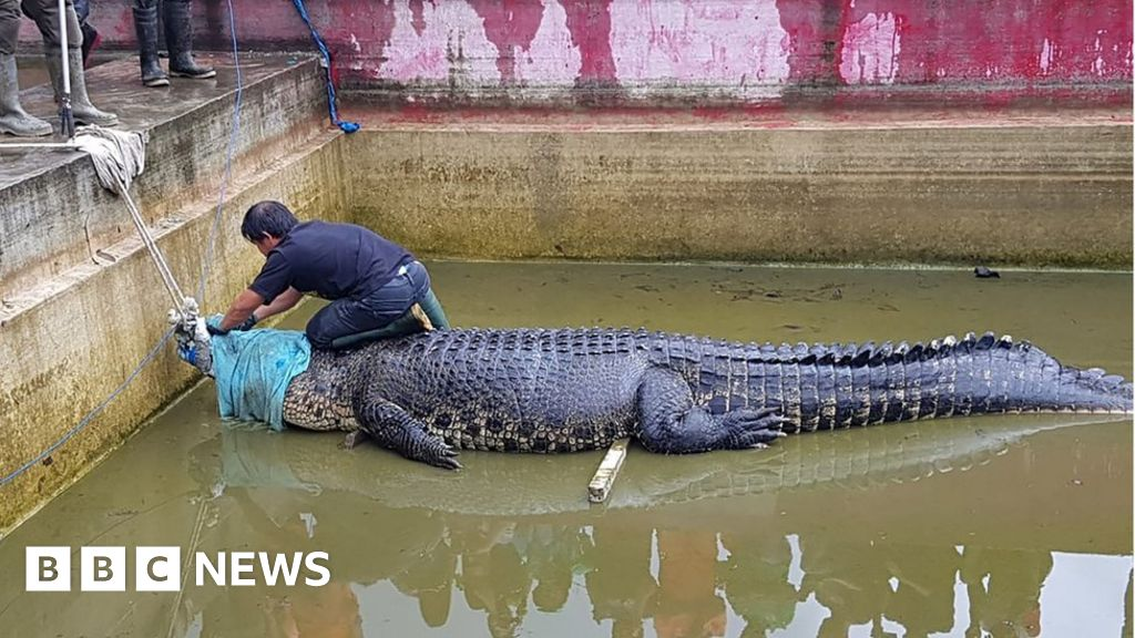 indonesian-woman-mauled-to-death-by-giant-pet-crocodile