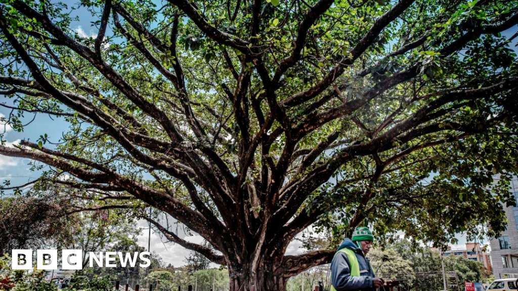 Viewpoint: Why Kenya's giant fig tree won over a president