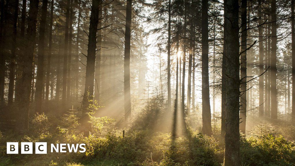 Tiffany Francis-Baker: How forests shaped our literary heritage and inspired a nation