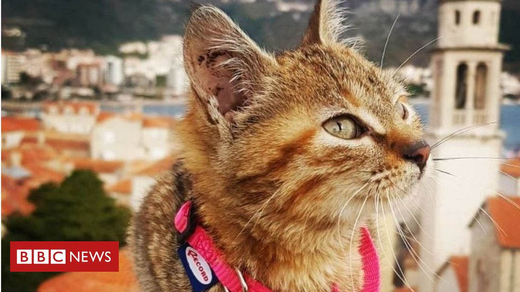 The cat who hitched a lift on a worldwide tour