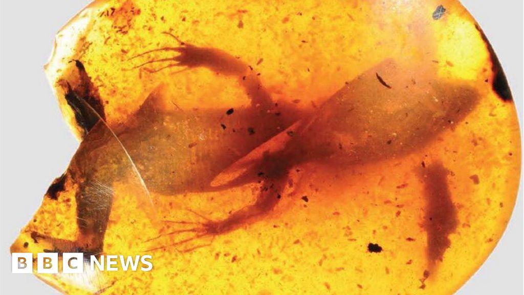 Dating amber fossiler