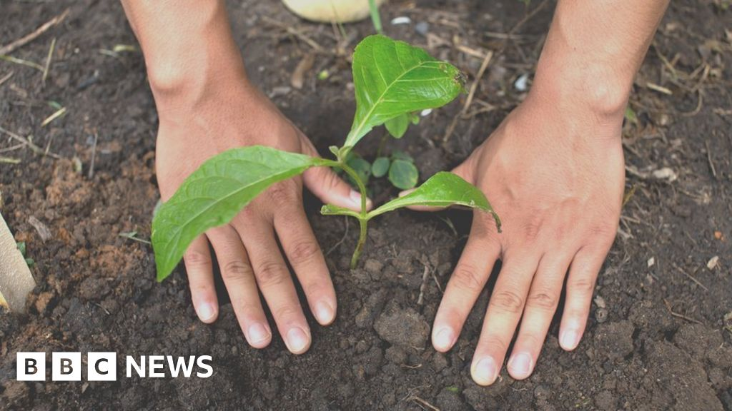 QnA VBage Climate change: Trees 'most effective solution' for warming
