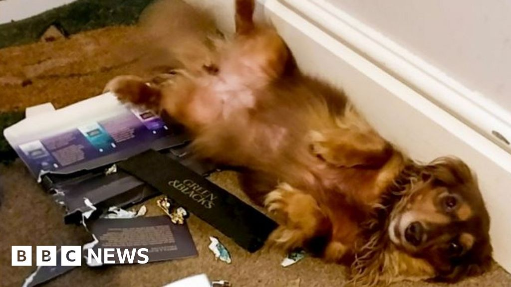 Dogs fall ill after eating shop's