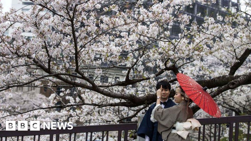 Login online cherry blossoms dating Cherryblossom Dating