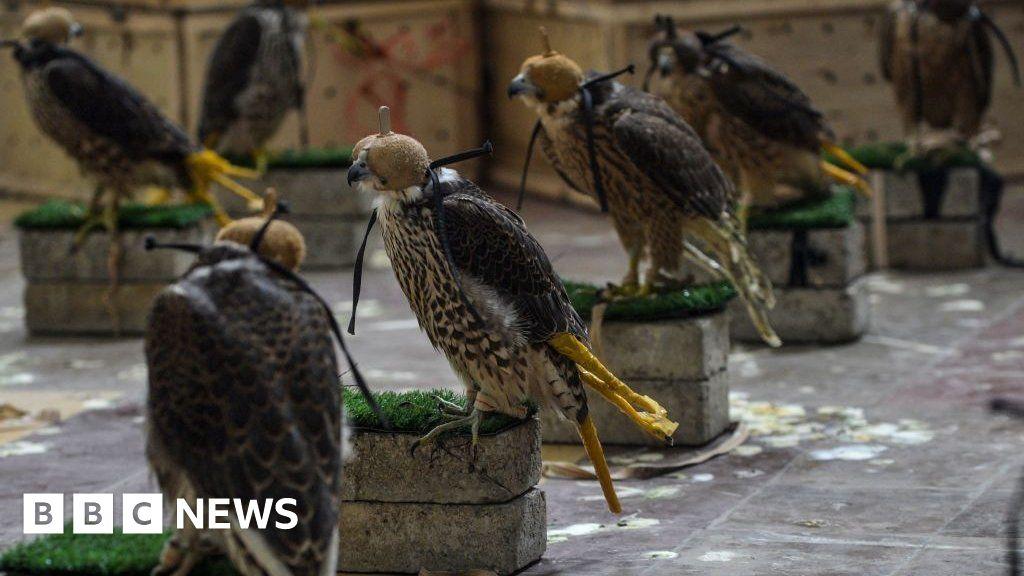 Pakistan stops bid to smuggle endangered falcons