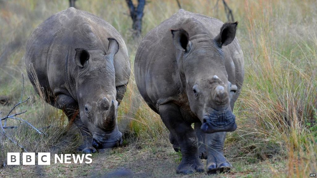 E Rhino Productions South Africa lifts ban...