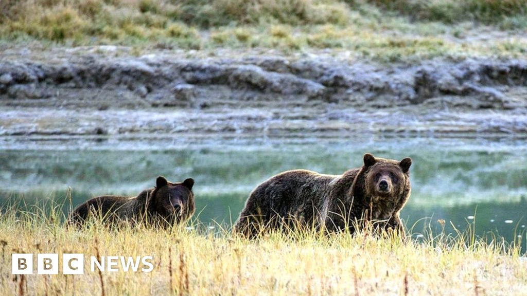 Soundgathering musician killed by grizzly bear