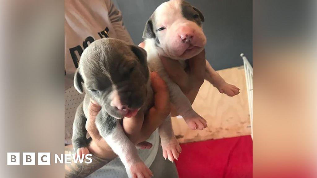 Violent puppy thieves to prison to Glasgow machete raid