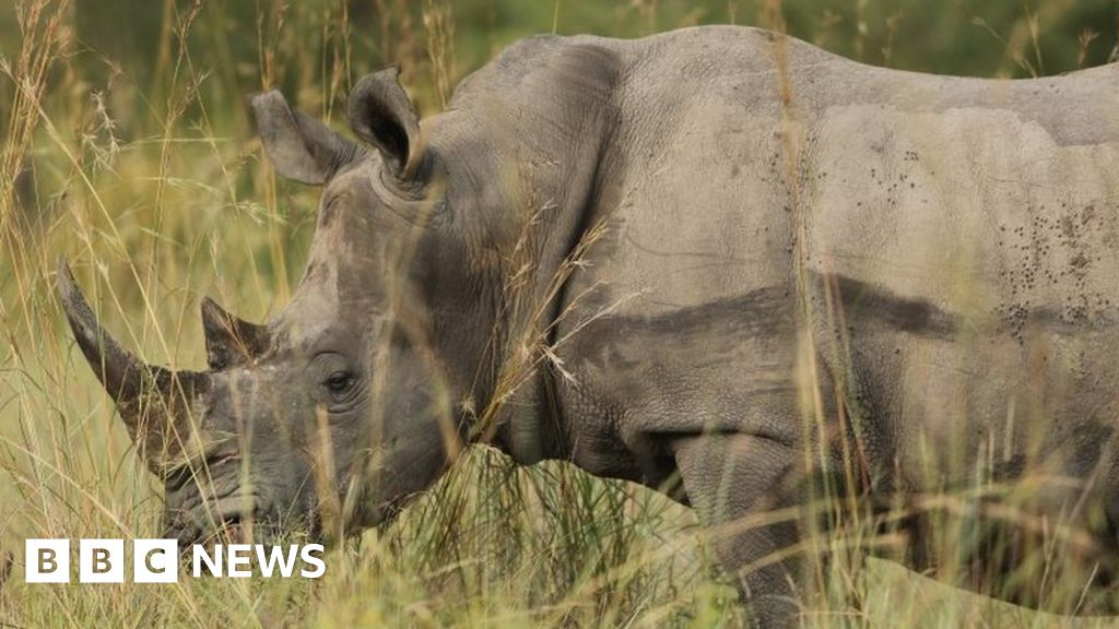 Leroy Brewer: South Africa hunt rhino poaching investigator's killers thumbnail