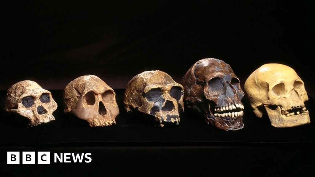 'Ghost' human ancestor discovered in West Africa - BBC News