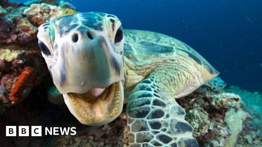 Blue Planet II: 22 things to know about the new series - BBC News