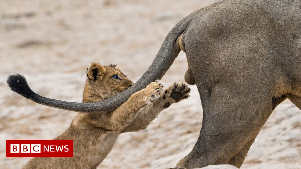 Comedy Wildlife Photography Awards 2019: The winning image
