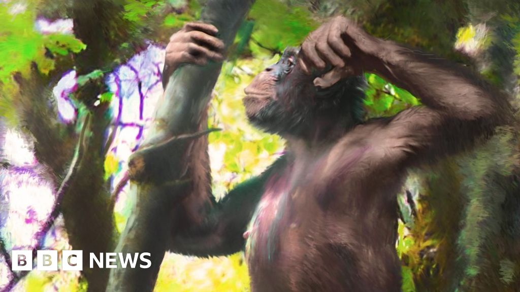 'Astonishing' fossil ape discovery revealed