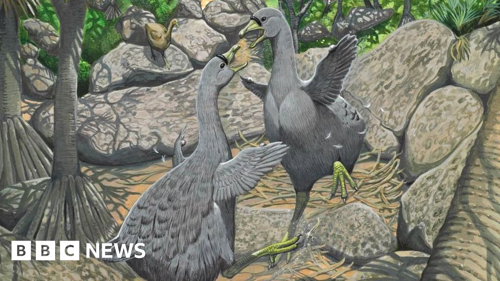 the cause of dodo birds extinction The dodo bird became extinct because it was a tasty dish however, the primary causes of their extinction where the destruction of the forest.