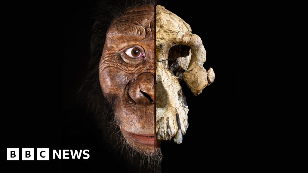 All bets now off  on which ape was humanity s ancestor