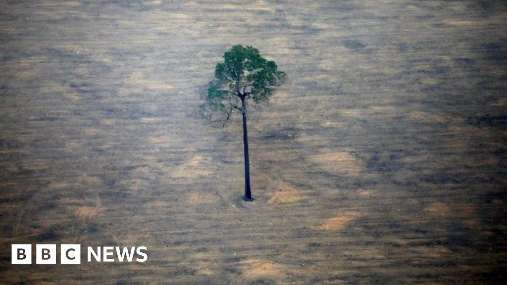 "Brazil ""needs $ 10 billion to achieve zero emissions,"" the minister says"