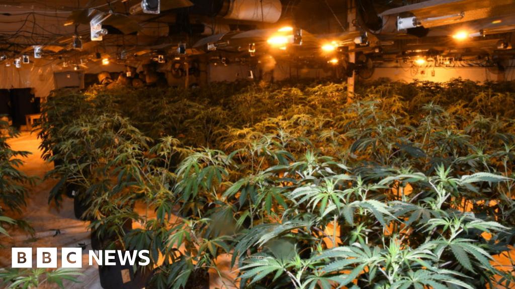 Trio who ran Lincolnshire's 'largest' cannabis farm jailed