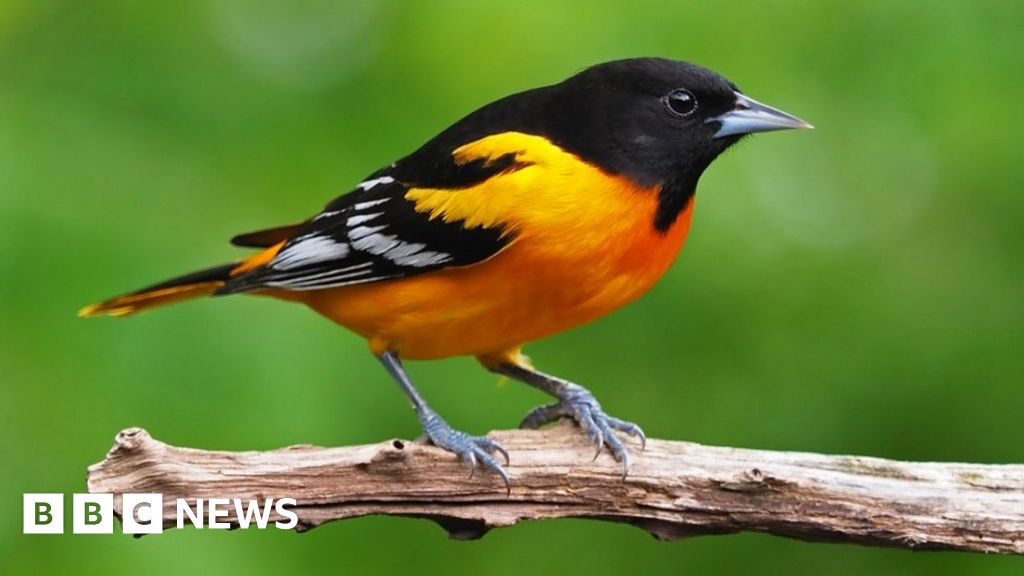 Bird populations in US and Canada down 3bn in 50 years