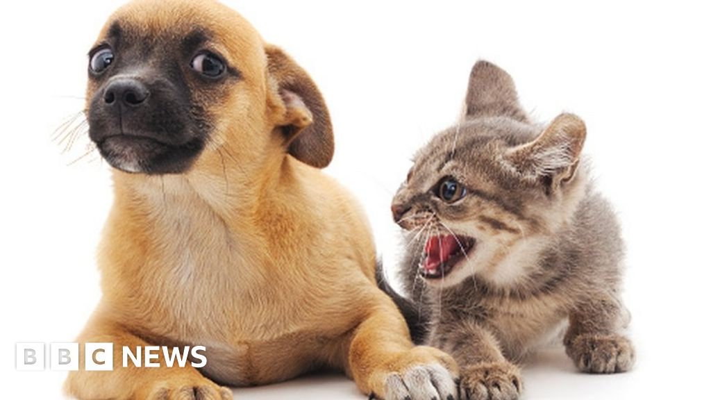 Cats may be as intelligent as dogs, say scientists - BBC News