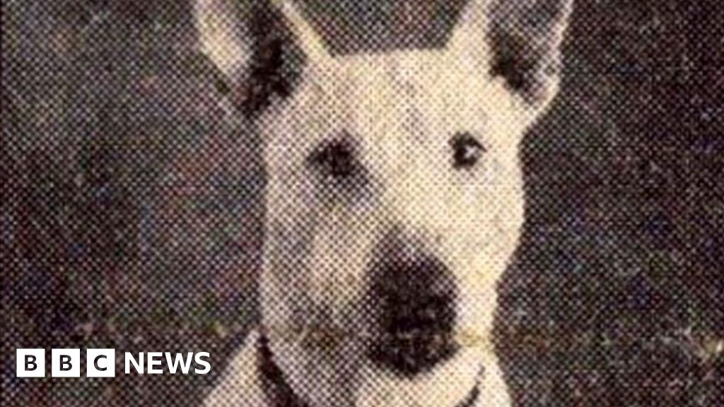 'Heroic' World War Two Dog To Be Honoured