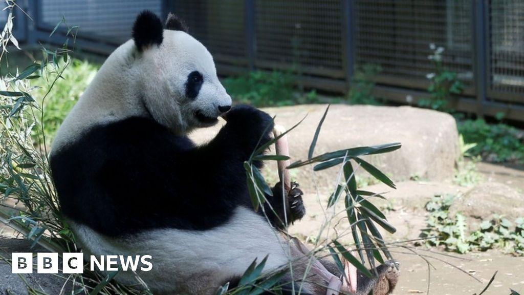 Giant panda gives birth to twins at Tokyo's Ueno Zoo