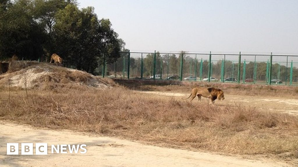 Teenager's remains found in Pakistan lion enclosure