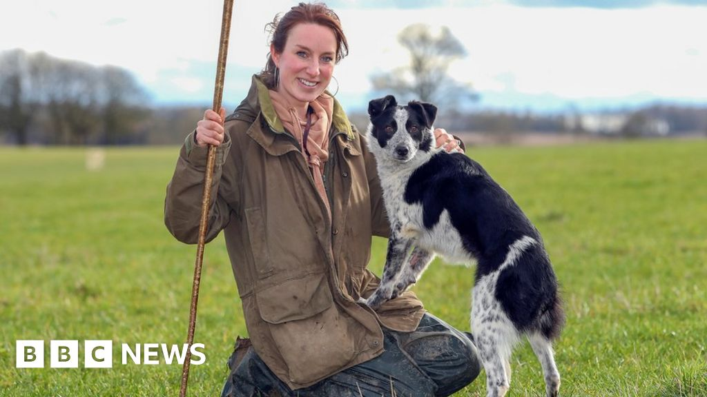 World's most expensive sheepdog sells for £18k
