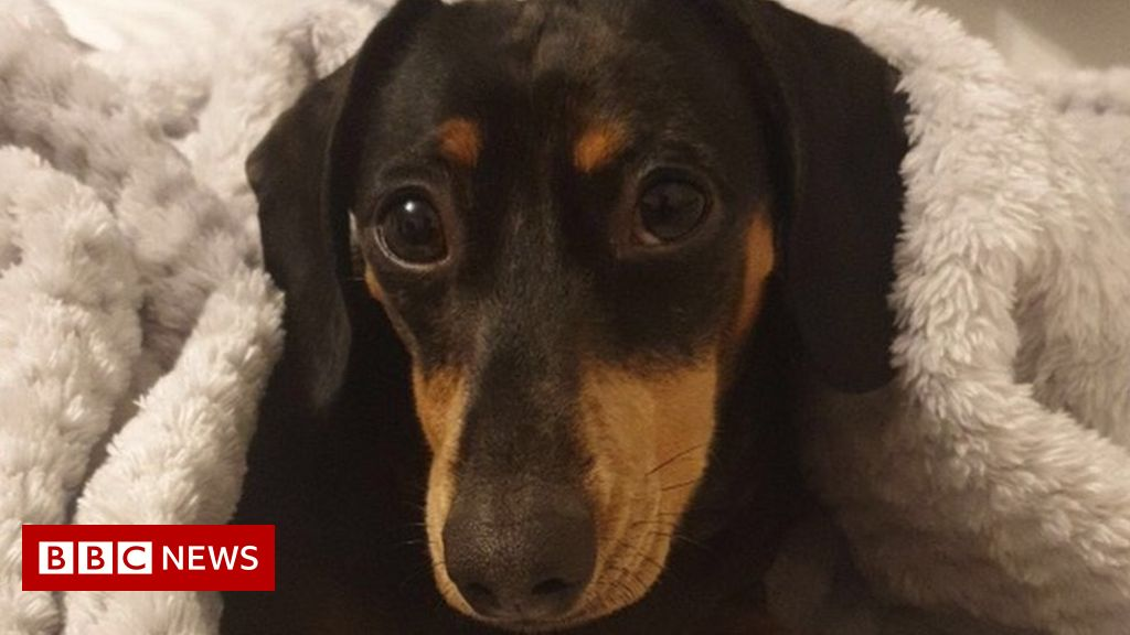 Man runs two miles to be reunited with stolen Derbyshire dog