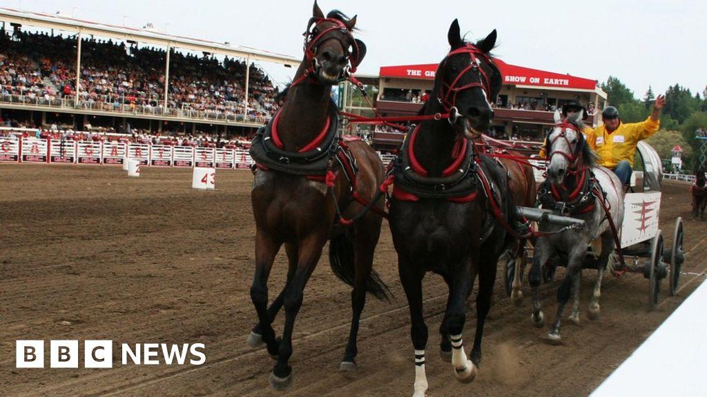 Calgary Stampede Why Horses Die On The Half Mile Of Hell