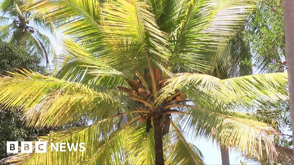 Why is Tanzania importing coconuts?