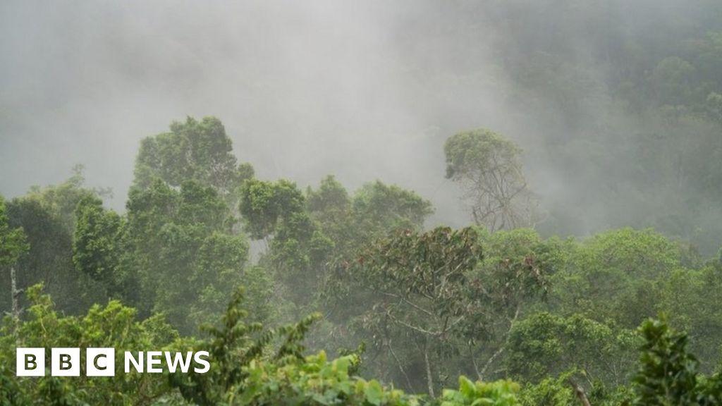 Six indigenous people 'massacred' in Nicaragua