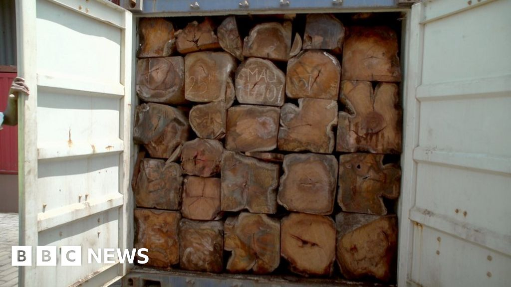 Shipping firm halts timber exports over smuggling