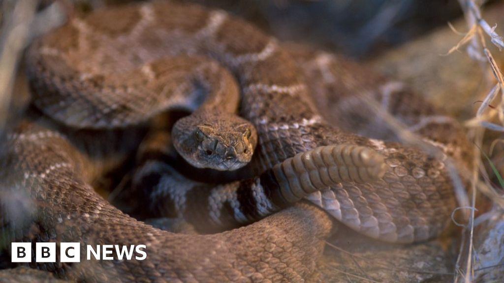 Texas man bitten by severed snake head