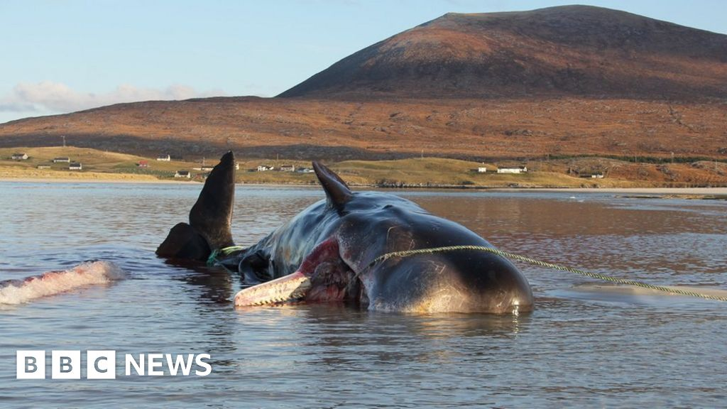 Whale dies with 100kg 'litter ball' in its stomach