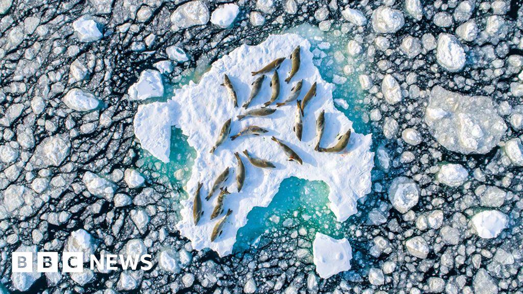 Antarctic seal photo wins top prize