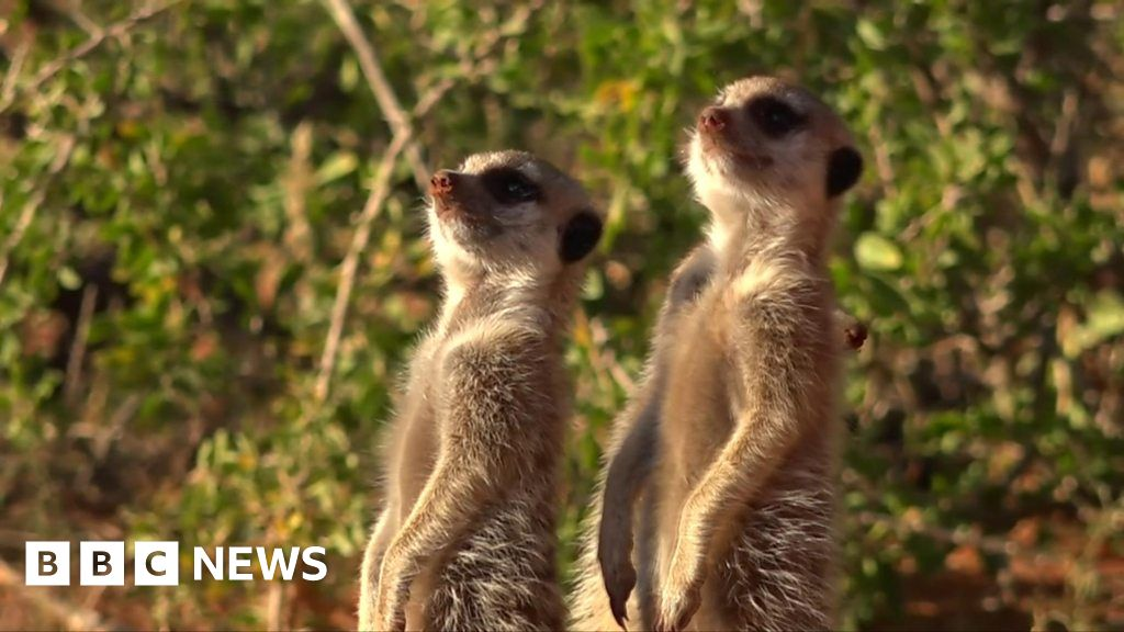 Safaris go virtual as coronavirus hits tourism - bbc