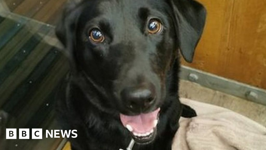 Nae Fireworks party  a godsend  for stressed dogs
