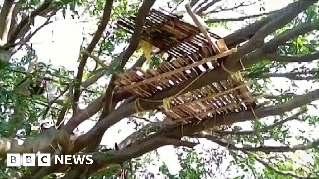 Coronavirus: Why some people with symptoms in India are living in trees