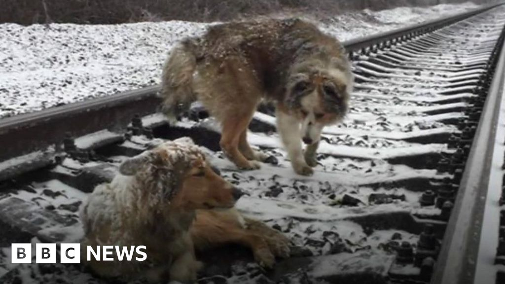 Dogs dodge trains on busy track