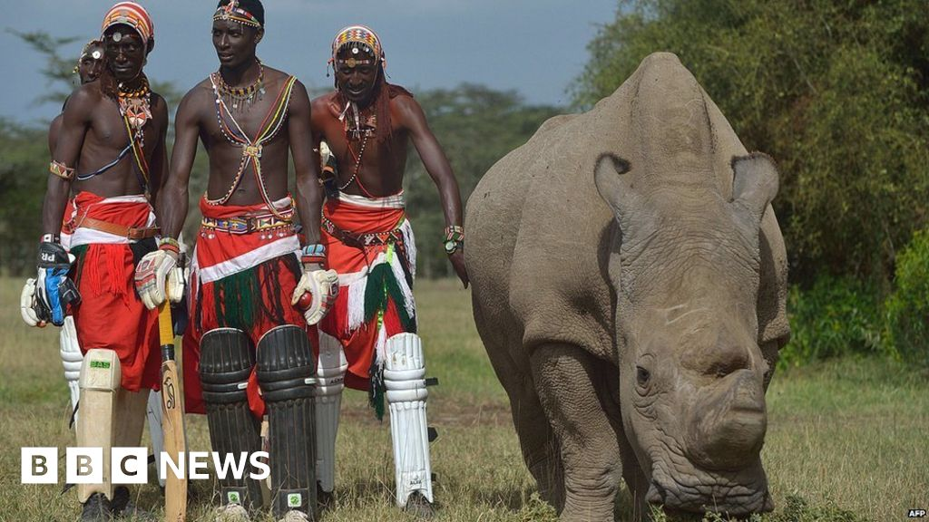 E Rhino Productions Africa in pictures: 12...