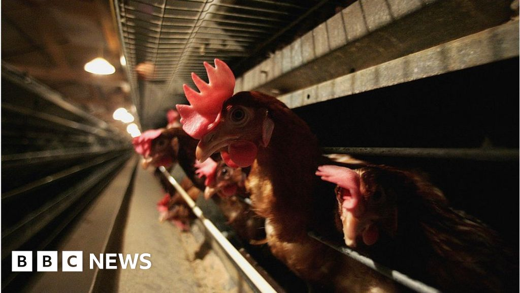 Meat sector warns of Brexit production squeeze