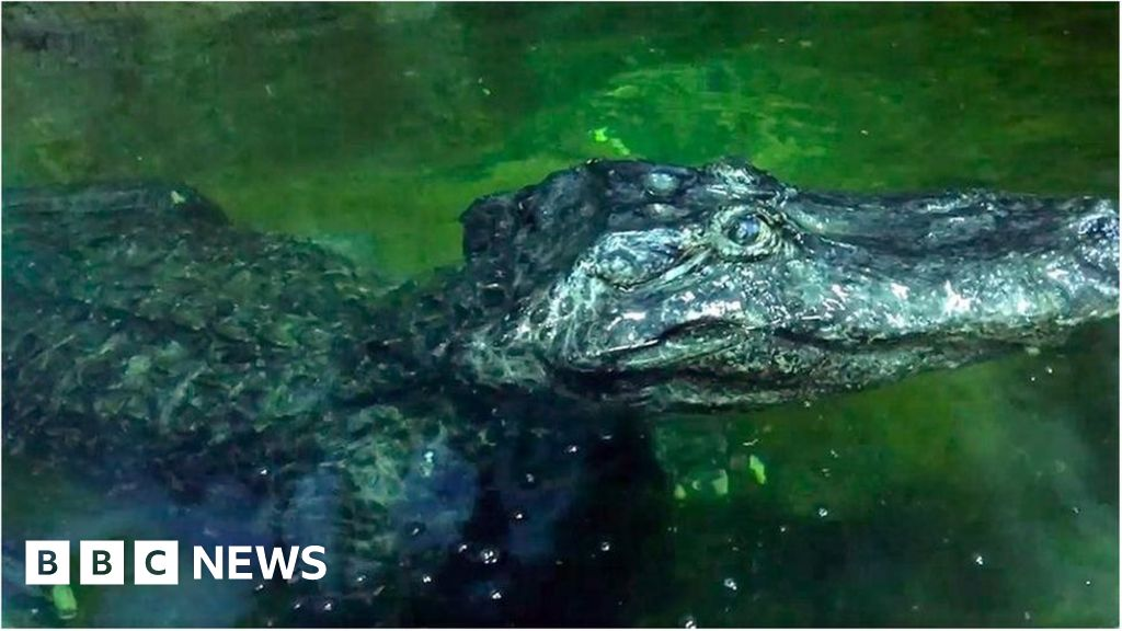 Adolf Hitler's 'pet' alligator Saturn dies in Moscow Zoo